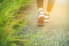 Gambe della donna di forma fisica che corrono al sentiero forestale Fotografia Stock