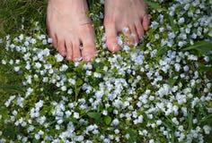 Gambe della donna su un campo con i piccoli fiori blu Piedi nudi della donna sull'erba della molla e sul giacimento di fiori fotografia stock