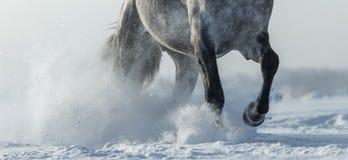 Gambe della fine del cavallo su in neve Immagini Stock