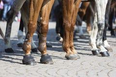 Gambe della polizia del cavallo Fotografia Stock Libera da Diritti