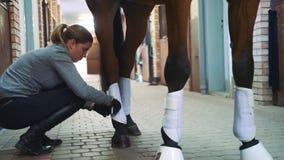 Gambe di bendaggio della donna del cavallo prima del giro archivi video