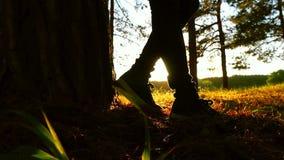 Gambe di una ragazza che fa una pausa un albero in una foresta contro un fondo di tramonto stock footage