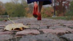 Gambe femminili eleganti che si allontanano nel parco di autunno video d archivio