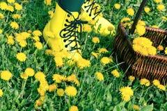 Gambe nel medow in pieno fuori dai fiori del dandeloin immagini stock libere da diritti
