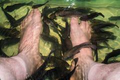 Gambe sotto la stazione termale del pesce dell'acqua Immagine Stock