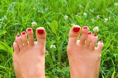 Gambe su erba verde Fotografia Stock Libera da Diritti