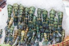 Gamberetti freschi in ghiaccio sul mercato Fotografia Stock Libera da Diritti