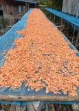 Gamberetto essiccato Fotografia Stock Libera da Diritti