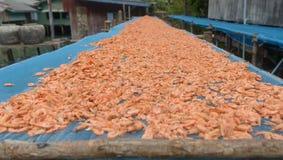 Gamberetto essiccato Fotografia Stock