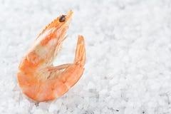 Gamberetto su un giacimento detritico di sale marino Un gamberetto crudo su un fondo bianco Macro Immagini Stock