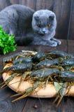 Gamberi in tensione su un vassoio di legno nella priorità alta Un gatto grigio sta esaminando un fermo fresco Fotografia Stock