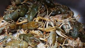 Gambero di fiume di Live European venduto al mercato ittico stock footage