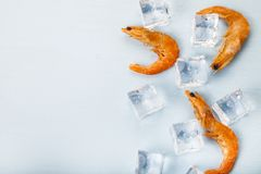 Gambero fresco su ghiaccio fotografia stock libera da diritti
