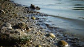 Gambero Gammarus sull'orlo della riva al bordo del ` s dell'acqua nell'estuario Tiligul Liman stock footage