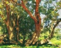 Gambi artisticamente di sguardo di vecchio albero fotografia stock libera da diritti