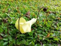 Gambi con il fiore fotografia stock