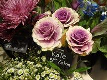 Gambi del cavolo da vendere in negozio floreale Immagine Stock Libera da Diritti