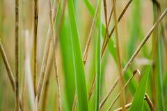 Gambi dell'erba Fotografie Stock Libere da Diritti