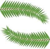 Gambi della palma Fotografia Stock Libera da Diritti