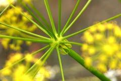 Gambi della pianta Fotografia Stock Libera da Diritti