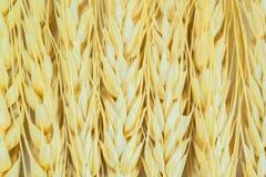 Gambi delle orecchie del grano Fotografia Stock Libera da Diritti