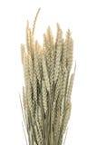 Gambi delle orecchie del grano su fondo bianco Fotografie Stock