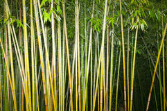 gambi di bambù Fotografia Stock Libera da Diritti