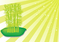 Gambi di bambù Immagini Stock Libere da Diritti