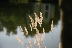 Gambi di erba asciutta nel campo su un fondo vago immagini stock libere da diritti