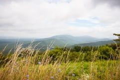 Gambi di erba con le montagne nebbiose nel fondo Fotografie Stock