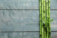 Gambi e spazio di bambù verdi per testo su fondo di legno immagini stock libere da diritti