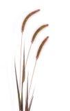 Gambi isolati dell'erba Fotografia Stock Libera da Diritti