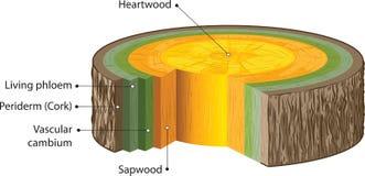 Gambi legnosi Fotografia Stock