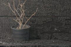 Gambi secchi del gelsomino Fotografia Stock