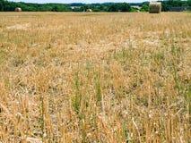 gambi sul campo raccolto in Val de Loire Immagini Stock