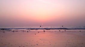 Gambia, hav solnedgång arkivfilmer