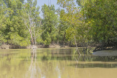 Gambia river Stock Photography