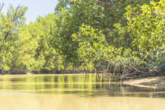 Gambia river. Sewer of the river Gambia. Flowing through the mangroves and Rainforest. Africa royalty free stock photography