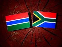 Gambijska flaga z południe - afrykanin flaga na drzewnym fiszorku odizolowywającym Fotografia Royalty Free