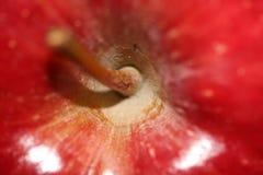 Gambo del Apple Fotografia Stock Libera da Diritti
