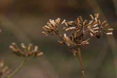 Gambo del fiore Fotografia Stock