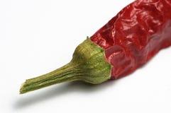 Gambo del pepe di peperoncino rosso Fotografie Stock Libere da Diritti