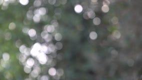 Gambo dell'albero di abete, abetaia e fascio del sole video d archivio