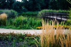 Gambo dell'erba verde che cresce all'aperto fotografie stock