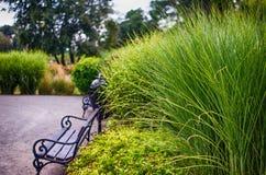 Gambo dell'erba verde che cresce all'aperto immagini stock