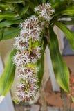 Gambo della pianta di cereale dei fiori bianchi parzialmente aperti immagine stock libera da diritti