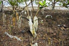 Gambo di plastica dell'albero delle mangrovie di inquinamento Fotografia Stock Libera da Diritti