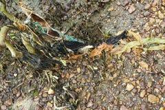 Gambo di plastica dell'albero delle mangrovie di inquinamento Fotografie Stock Libere da Diritti