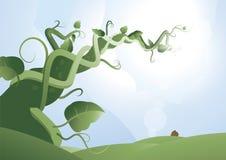 Gambo di una pianta di fagioli 2 Immagini Stock