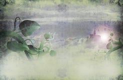 Gambo di una pianta di fagioli largamente Fotografie Stock